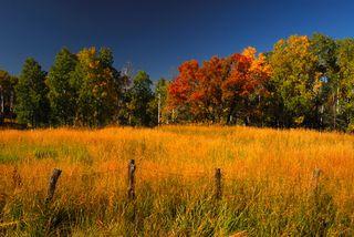 Autumn Fields-1